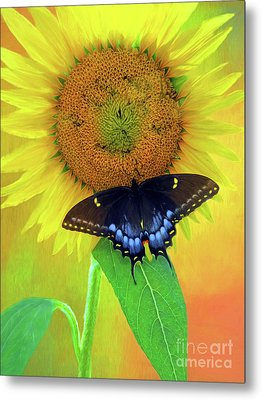 Sunflower With Company Metal Print by Marion Johnson
