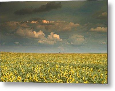 Sunflower World.. Metal Print by Al  Swasey