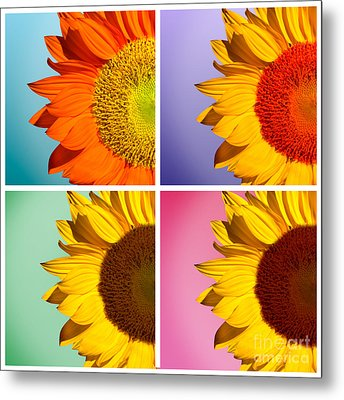 Sunflowers Collage Metal Print by Mark Ashkenazi