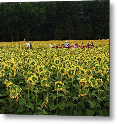 Sunflowers Everywhere Metal Print by John Scates
