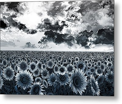 Sunflowers Filed 2 Metal Print