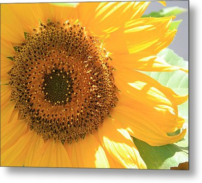Metal Print featuring the photograph Sunflowers  by Marna Edwards Flavell