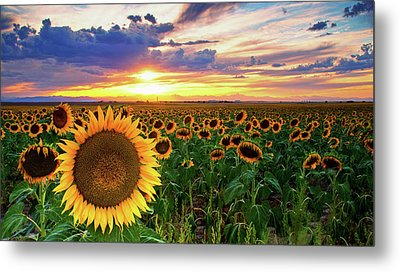 Sunflowers Of Golden Hour Metal Print