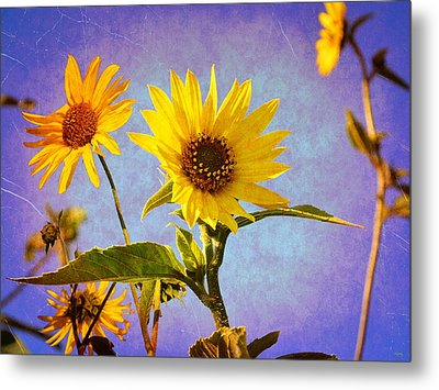 Metal Print featuring the photograph Sunflowers - The Arrival by Glenn McCarthy Art and Photography