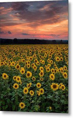 Sunflowers To The Sky Metal Print by Michael Blanchette
