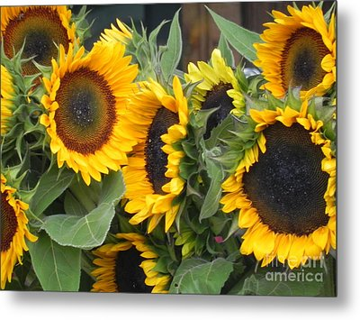 Metal Print featuring the photograph Sunflowers Two by Chrisann Ellis
