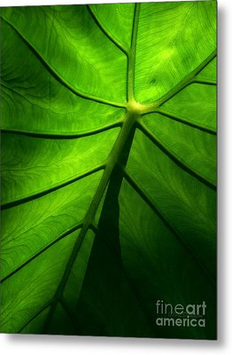 Sunglow Green Leaf Metal Print by Patricia L Davidson