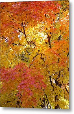 Metal Print featuring the photograph Sunkissed 2 by Elizabeth Sullivan