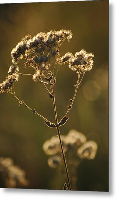 Metal Print featuring the photograph Sunkissed by Lori Mellen-Pagliaro