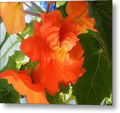 Sunkissed Orange Begonias Metal Print