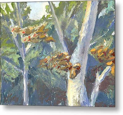 Sunlight And Sycamores Metal Print