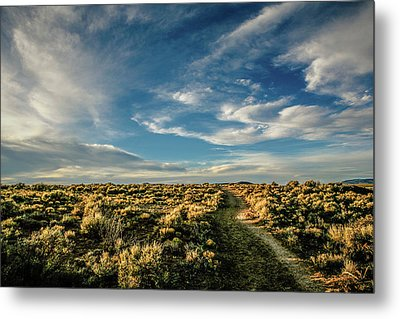 Metal Print featuring the photograph Sunlight For Photographers by Marilyn Hunt
