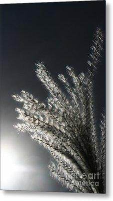 Sunlight Grass Metal Print by Steve Augustin
