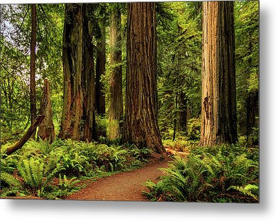 Metal Print featuring the photograph Sunlight In The Redwoods by James Eddy