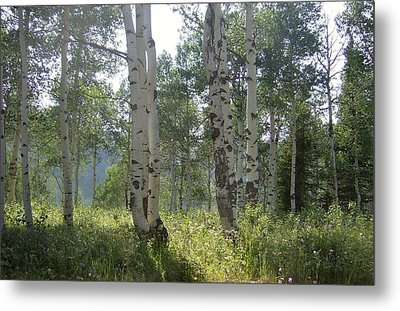 Sunlight In The Trees Metal Print by Susan Pedrini