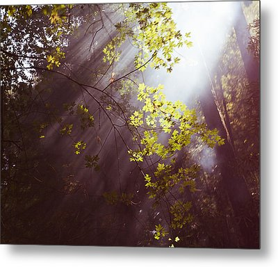 Metal Print featuring the photograph Sunlit Beauty by Lora Lee Chapman