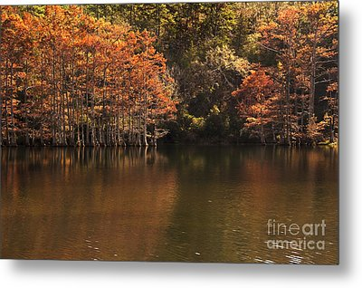 Metal Print featuring the photograph Sunlit Cypress Trees On Beaver's Bend by Tamyra Ayles