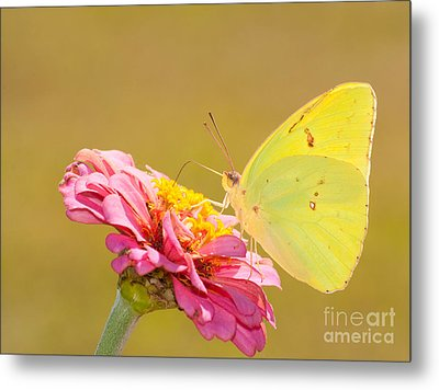 Sunlit Yellow Metal Print