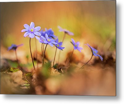 Metal Print featuring the photograph Sunny Afternoon With Liverworts by Jaroslaw Blaminsky