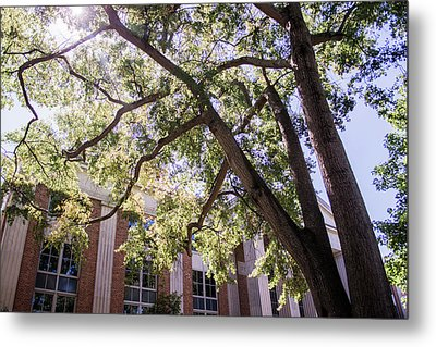 Metal Print featuring the photograph Sunny Days At Uga by Parker Cunningham