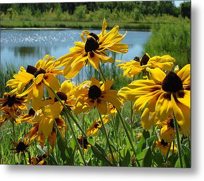 Metal Print featuring the photograph Sunny Days by Christie Minalga