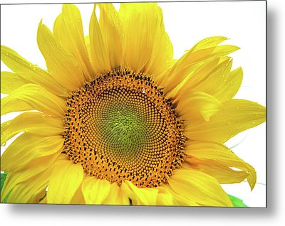 Metal Print featuring the photograph Sunny Flower 1 by Jenny Rainbow