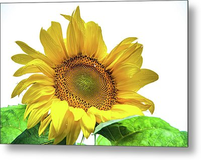 Metal Print featuring the photograph Sunny Flower by Jenny Rainbow