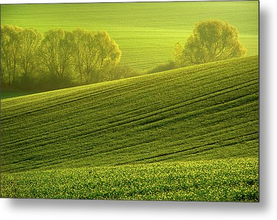 Metal Print featuring the photograph Sunny Green by Jenny Rainbow