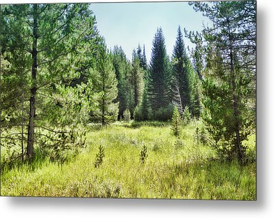 Sunny Mountain Meadow - Landscape Photograph Metal Print by Ann Powell