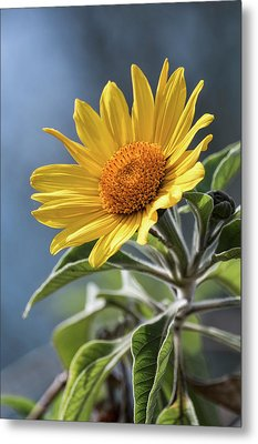 Metal Print featuring the photograph Sunny Side Up  by Saija Lehtonen