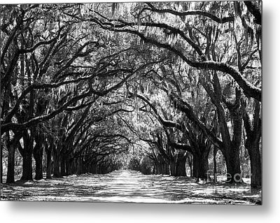 Sunny Southern Day - Black And White Metal Print by Carol Groenen