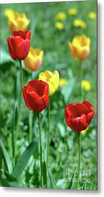 Sunny Tulips Metal Print