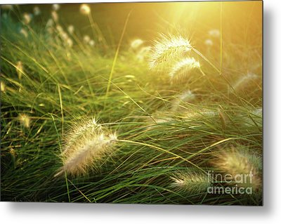 Sunny Vegetation Metal Print