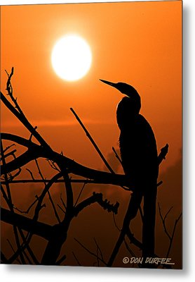 Metal Print featuring the photograph Sunrise Anhinga by Don Durfee