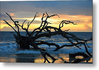 Sunrise At Driftwood Beach 1.1 Metal Print by Bruce Gourley