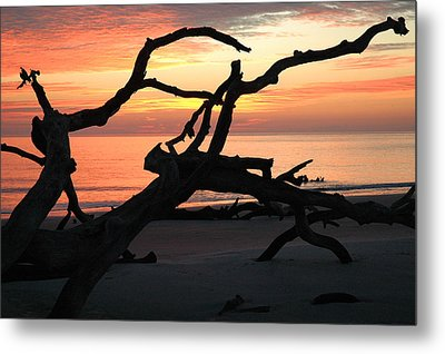 Sunrise At Driftwood Beach 3.1 Metal Print by Bruce Gourley