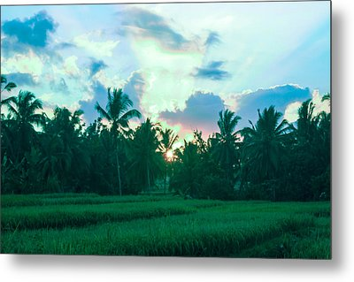 Sunrise Breaking Over Rice Metal Print by Caroline Benson