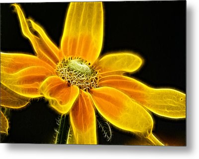 Sunrise Daisy Metal Print
