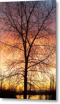 Sunrise December 16th 2010 Metal Print by James BO  Insogna