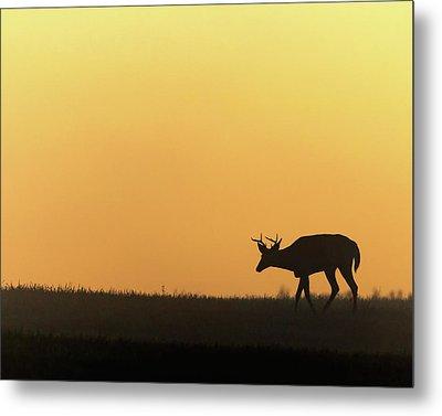 Sunrise Deer Metal Print by Bill Wakeley