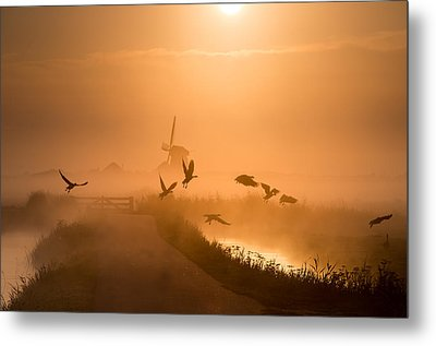 Sunrise Flight Metal Print by Harm Klaverdijk