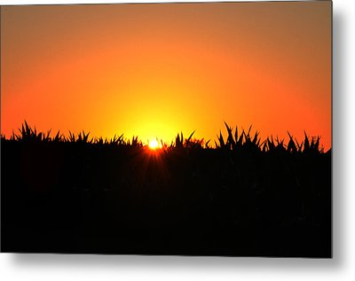 Sunrise Over Corn Field Metal Print by Bill Cannon
