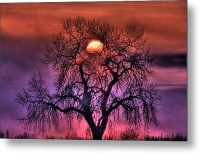 Sunrise Through The Foggy Tree Metal Print
