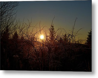 Sunrise Thru The Brush Metal Print