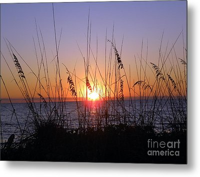 Sunset And Seaoats Metal Print by Terri Mills