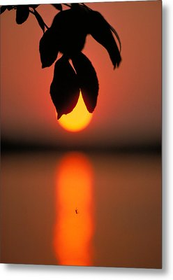 Sunset And Spider Metal Print by Thomas Firak