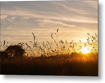 Sunset And Wheat Field Metal Print