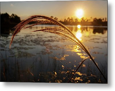 Metal Print featuring the photograph Sunset At Gator Hole 2 by Arthur Dodd