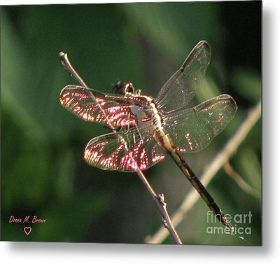 Metal Print featuring the photograph Sunset Dragonfly by Donna Brown