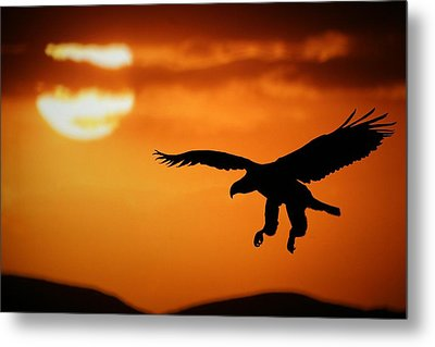 Metal Print featuring the mixed media Sunset Eagle by Riana Van Staden